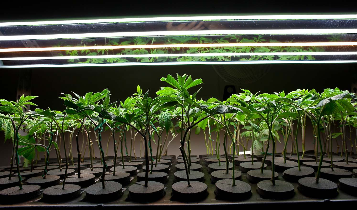 Tips and Tricks for cloning success